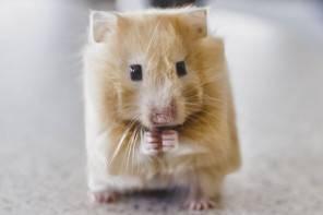 Ecco come sarebbero gli animali se fossero cubici
