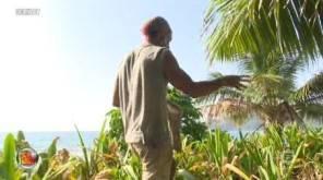 Isola dei famosi Raz Degan e l'ultimo forte gesto contro gli altri naufraghi